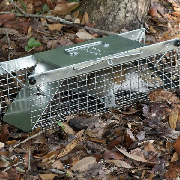 buy squirrel trap online