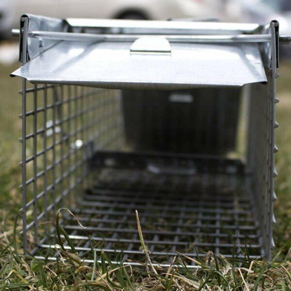 catch squirrel trap