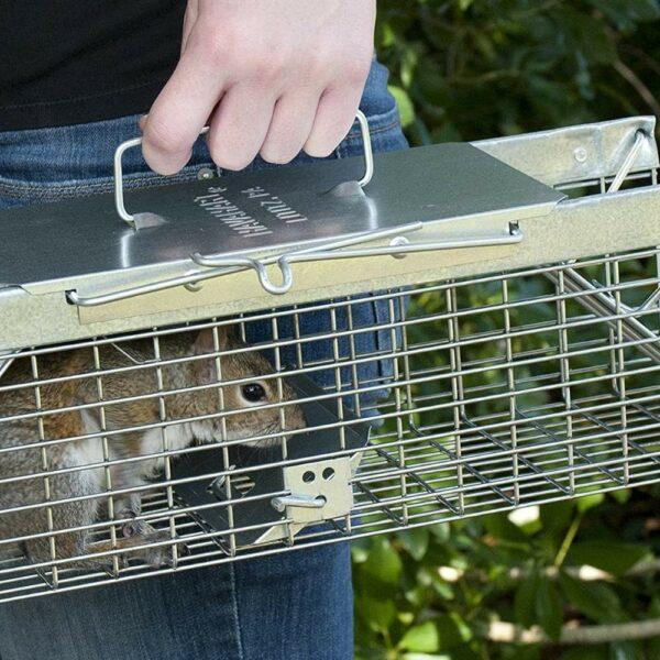 squirrel caging